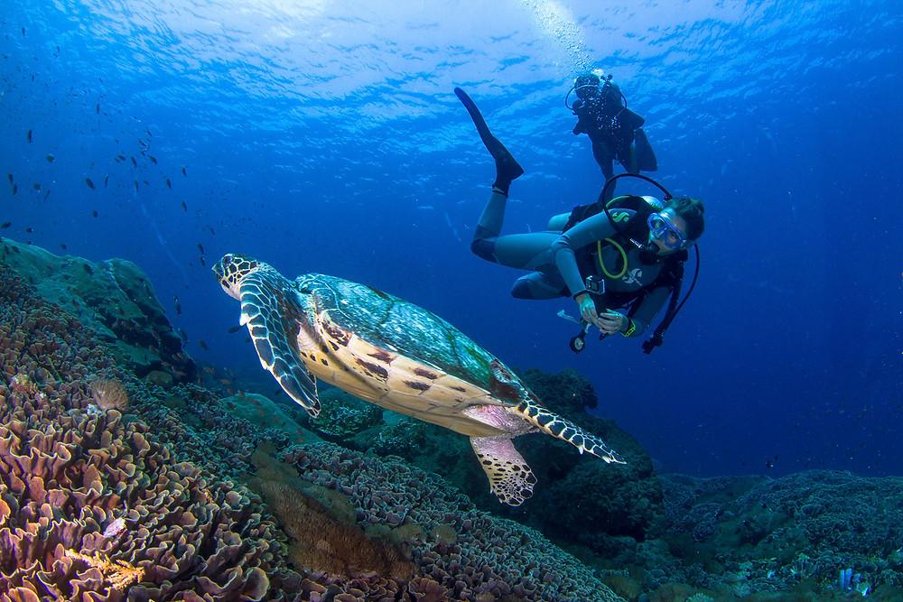 Turtle along the reef in Nusa Penida
