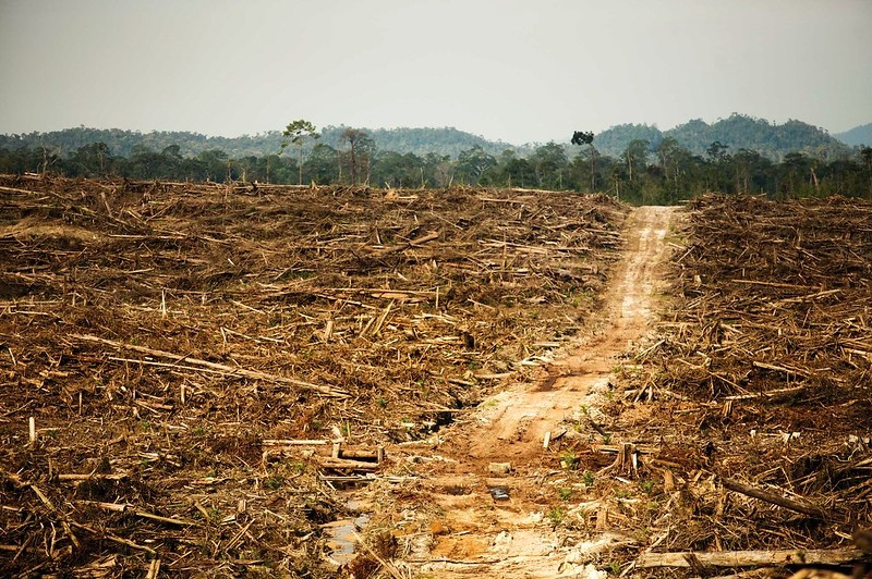 Deforestation in Indonesia for palm oil production.