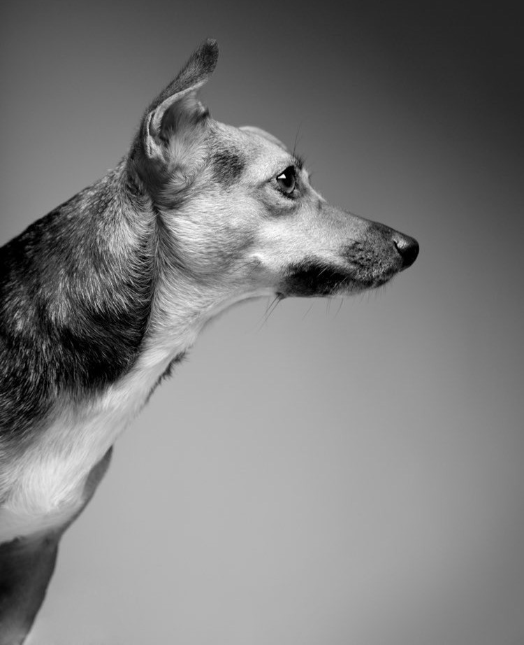 Simon Cowell's adopted dog Daisy