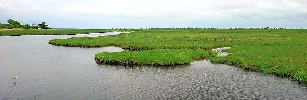 Chobe river bateau