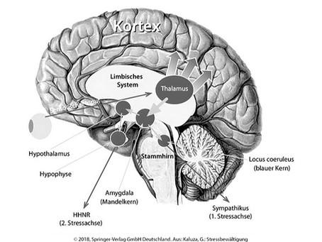 Stress & Gehirn