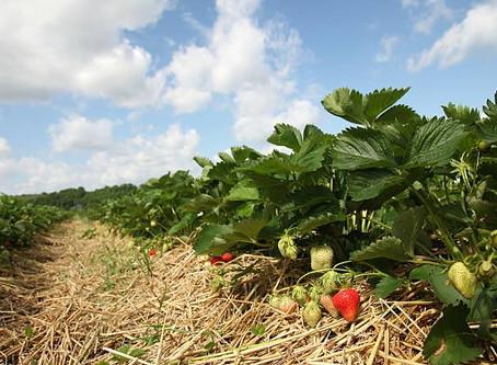 Природное земледелие. Полный видеокурс.