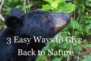 3 Easy Ways to Give Back to Nature
