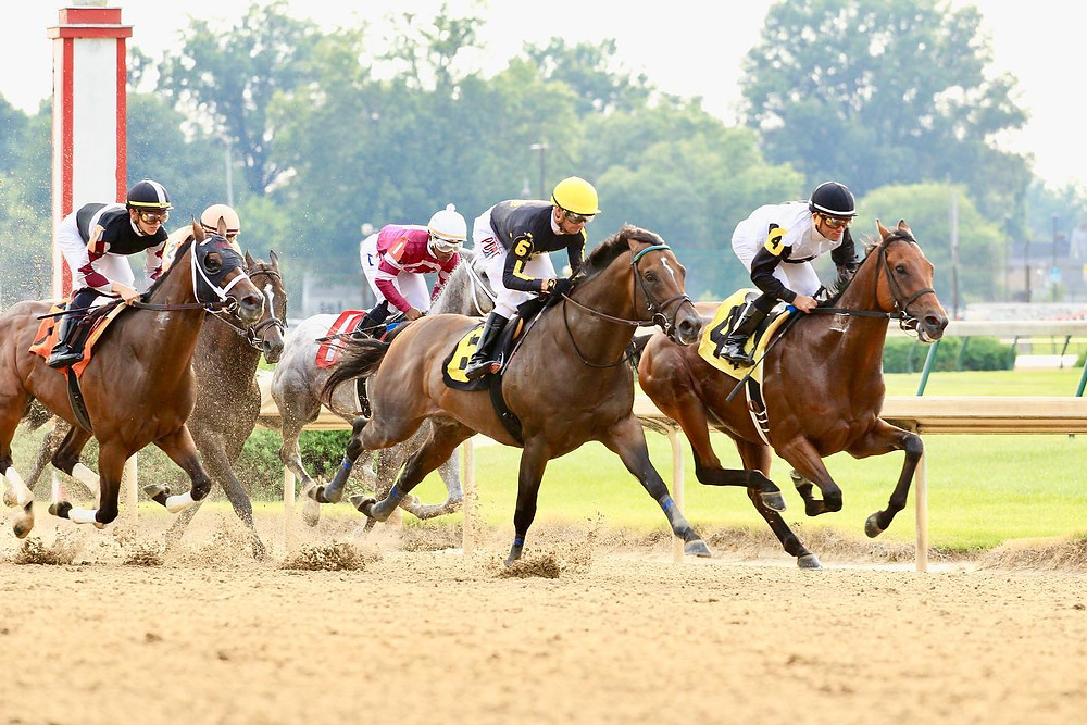 Live horse racing at Churchill Downs. Reasons to attend live racing.