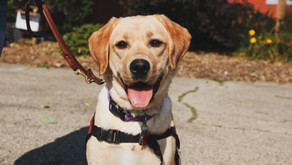 A CCSDA Volunteer's Experience with Heartworm Disease