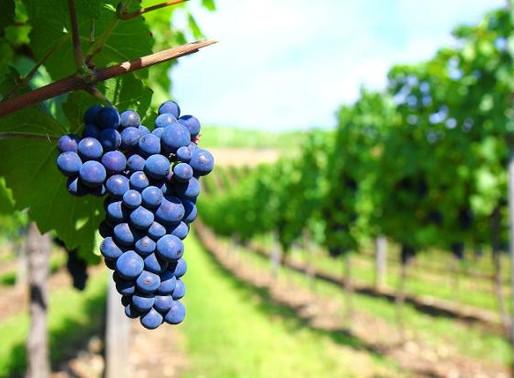 ¿Ya habías escuchado del país vitivinícola?