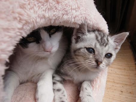 外猫さくらちゃん奮闘記 最終回 : 仲良く元気でいつまでも