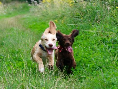 The benefits of hiring a dog walker