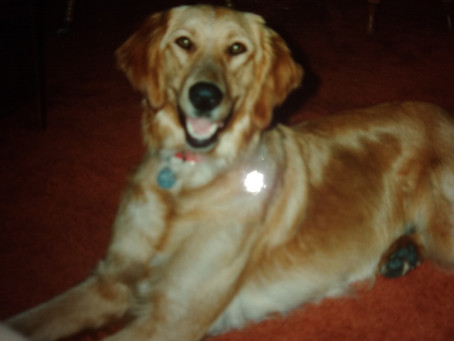 Some musings with Nutmeg, the Service Dog