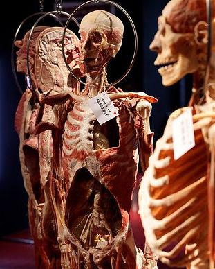 Plastinarium Museum 3.jpg