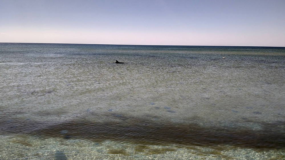 azov sea trip traverse tactical team ttt sand beach summer vacation ukraine kherson траверс тактикал тим ттт азов азовское море херсон лето море отпуск путешествие пляж песок солнце ттт dolphin sea ocean дельфин плавник море океан горизонт