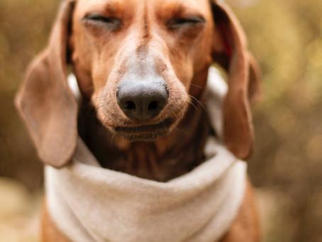 Frustration in Dog Training