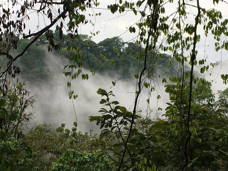 Mist coming of the bellavista river