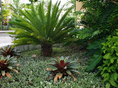 Arroyo Quad Series: Cycad Collection Deborah Strelkow | Contributing Writer