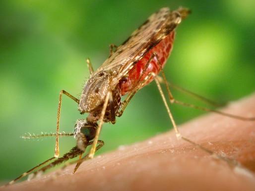 Insect Bite Prevention
