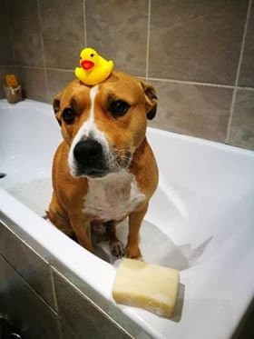 dog in the bath
