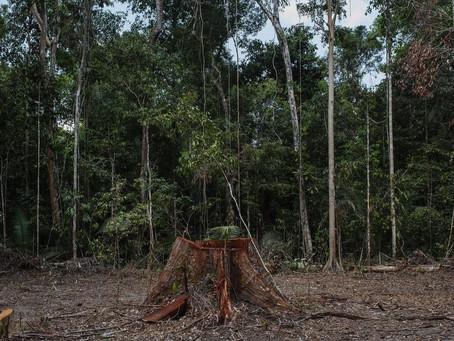 MP 910/19, que regulariza a grilagem na Amazônia, entra na pauta da Câmara dos Deputados