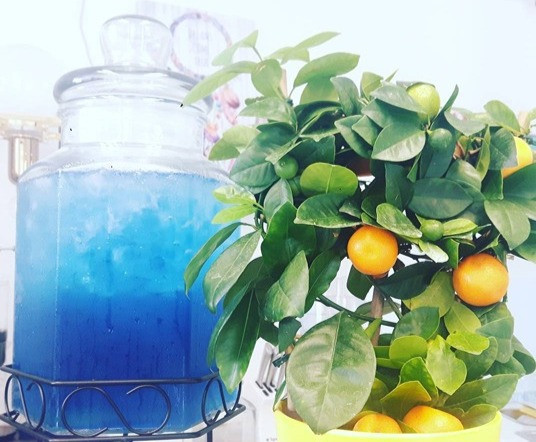 Chilled healthy tea - chinese butterfly blue tea.