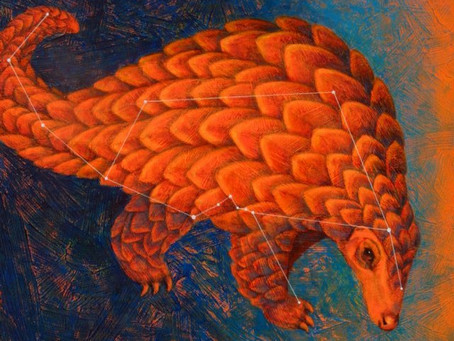 Constellation Manis, or, What the Heck is a Pangolin?