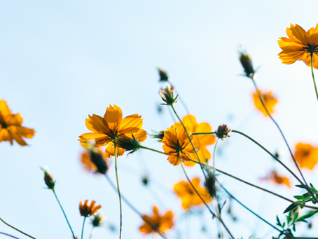 Tips to Minimise Hay Fever Symptoms.