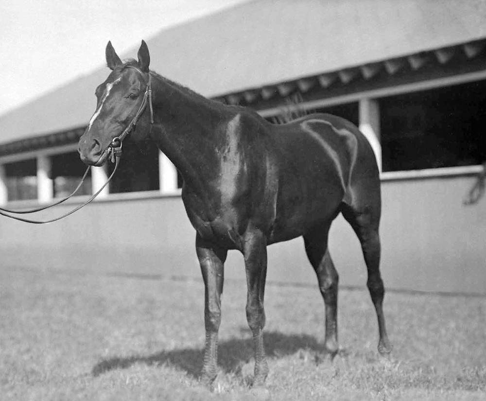 Equipoise, champion racehorse from 1930 to 1935 and unofficial Horse of the Year .