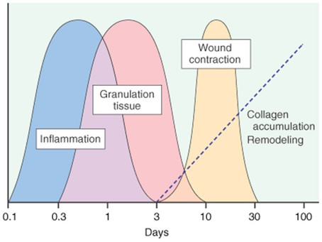 The Inflammation Cycle and Chronic Wounds