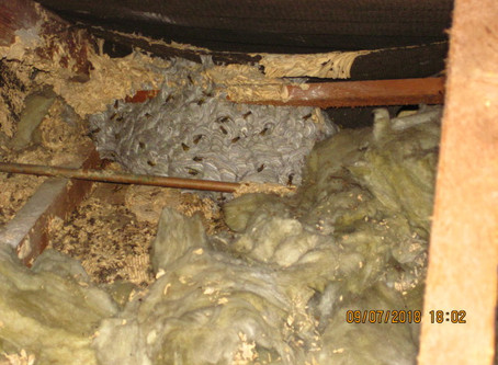New nest built on old nest site