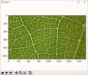 Microscopic leaf in matplotlob.
