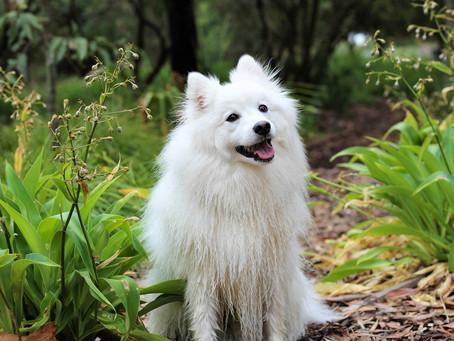 Graus de Luxação de Patela em Cães