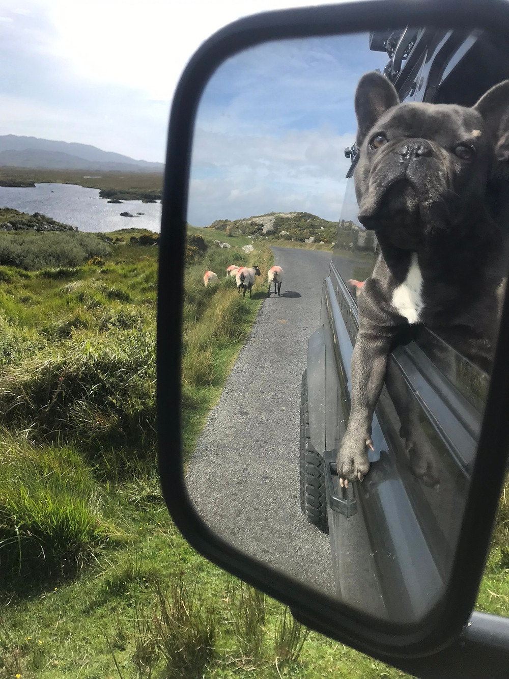 Coopers Travels - Dogfatherz Galway Sheep