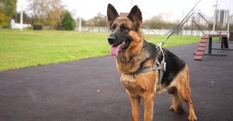Кучето како регуларен полициски службеник