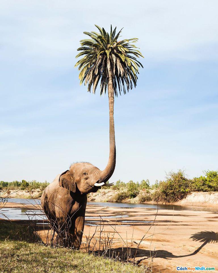 Cây cọ voi chế tác ảnh của justin peters