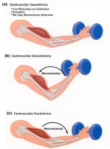 La imagen muestra los tres tipos de contracciones.