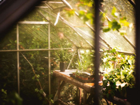I'm a member of Garden Church- 3 lessons I've learned while meeting Holy Spirit amongst Houseplants