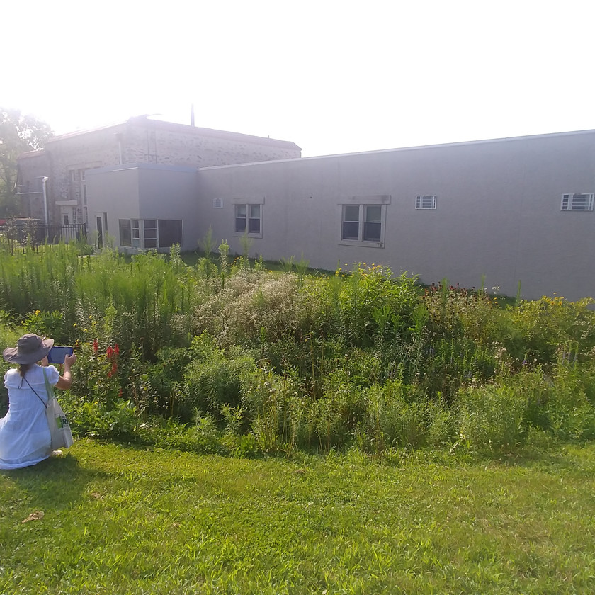 Liz Reed stops to photograph a rain garden