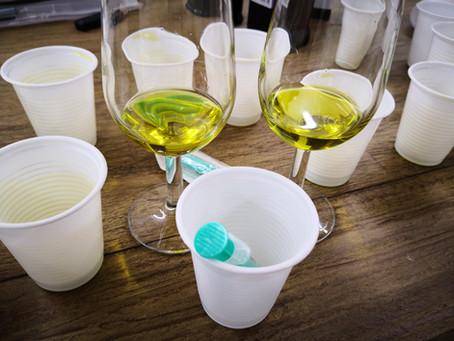 Lancierung Olivenölkursreihe zur Steigerung der Olivenölqualität im Schweizer Detailhandel