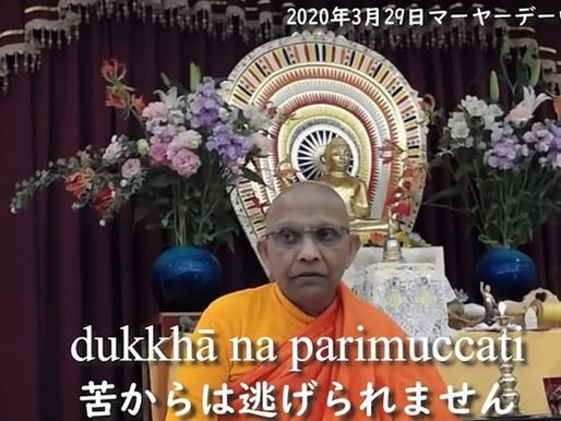スマナサーラ長老の初期仏教法話動画