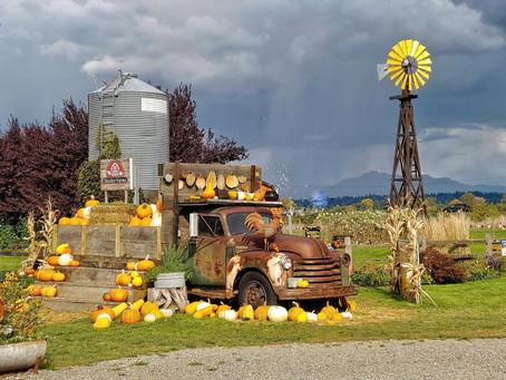 Top 10 Farms in Washington State to Celebrate The Fall Season