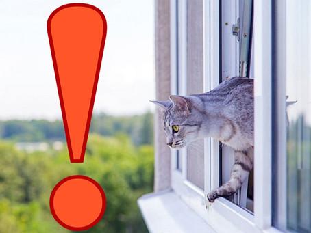 Окна и сфинксы: жить или не жить?