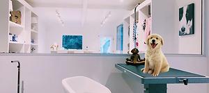 Groom Salon