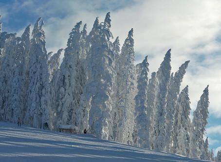 Schulschikurs im Winter-Wunderland