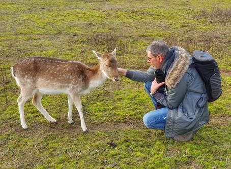 Wisentgehege Usedom - Eine besondere Begegnung