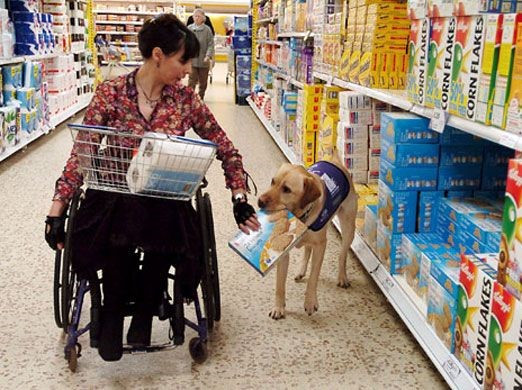 dog helping a person in a wheelchair go shopping
