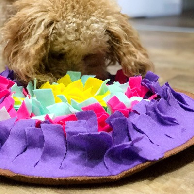 dog with a snuffle mat looking for hidden treats