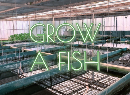 Sustainable Aquaculture without Antibiotics