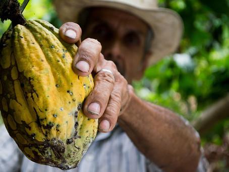 Aux sources du cacao : un projet engagé de réalité virtuelle multisensorielle autour du chocolat...