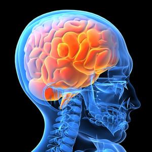 Unser geniales Gehirn