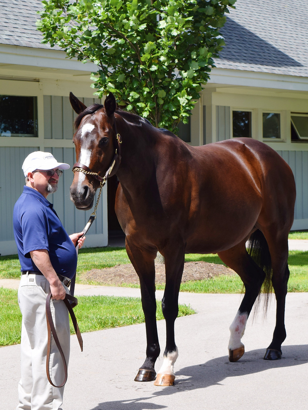 Rachel Alexandra, 2009 Horse of the Year. 2009 Kentucky Oaks and Preakness Stakes. Facts about Rachel Alexandra.