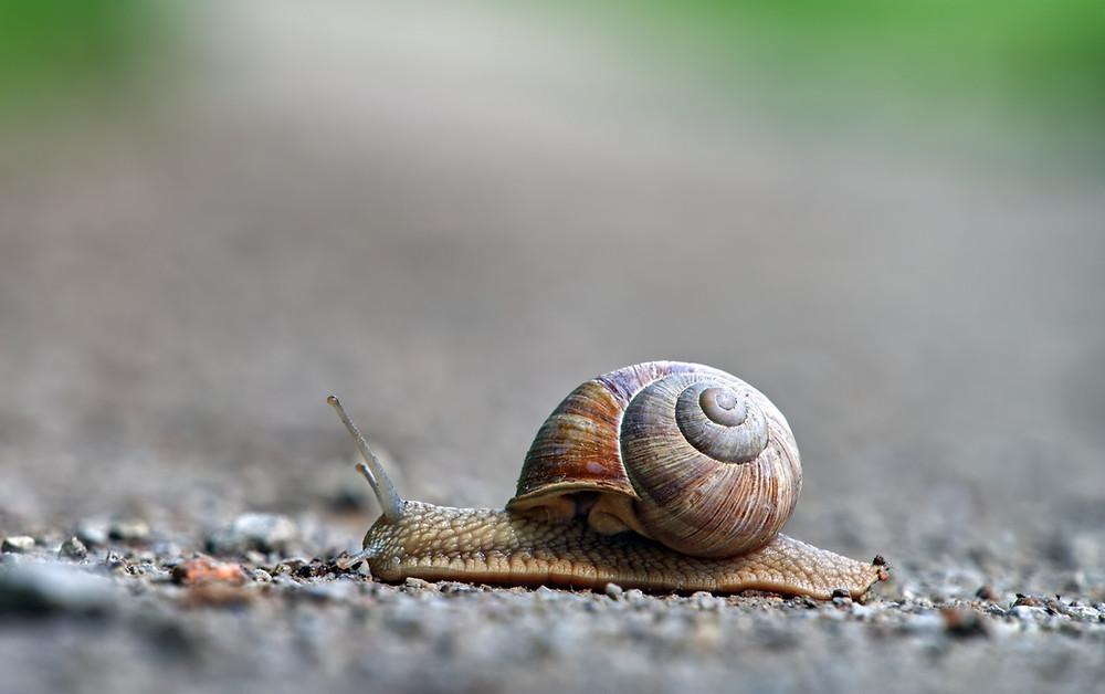 snail at its home