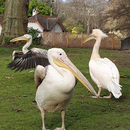 A Walk around St James's Park